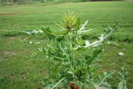 (Özel) Yeni bir bitki türü keşfedildi