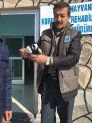 Yaralı mahmuzlu kız kuşu tedavi altına alındı