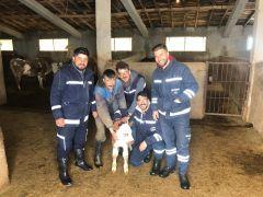 Doğum yapmakta zorlanan ineğin imdadına VEDAŞ ekipleri yetişti