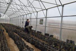 Van'daki yerel meyve ve sebzeler koruma altına alınıyor