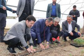 Başkan Tanış, fideleri toprakla buluşturdu