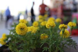 Gürpınar çiçek açtı