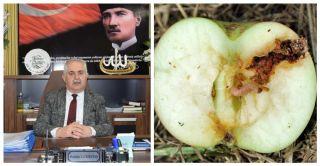 Müdür Görentaş'tan elma üreticisine uyarı
