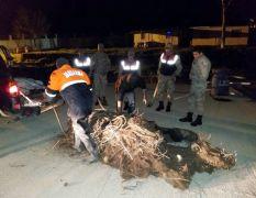 Van'da 500 kilo ölü inci kefali ele geçirildi