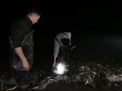 Van'da balık operasyonu