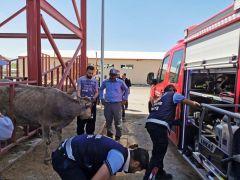 Van'da hayvan kurtarma operasyonu