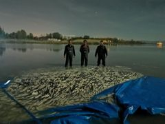 Van'da kaçak avlanmış 3 ton balık ele geçirildi