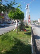 Çaldıran Belediyesinden park ve bahçe bakımı