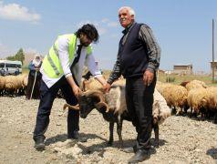 Van Büyükşehir Belediyesinden çiftçilere destek