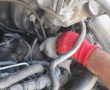 Aracın motor bölmesine sıkışan yavru kedi kurtarıldı