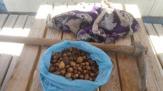 Salep soğanı toplayan şahsa 60 bin TL ceza