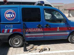 Çaldıran'da kaçak Tilki avlayan şahsa 2 bin 20 lira ceza