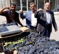 Erciş'in 3 bin yıllık endemik üzümü piyasaya çıktı
