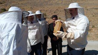 Van'da verimli bal hasadı başladı