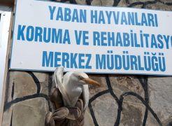 Yaralı Sığır Balıkçılı tedavi altına alındı