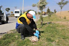 Yaralı köpeğe Tuşba Belediyesi sahip çıktı