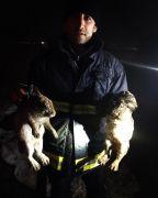Çaldıran'da çıkan yangında 25 tavuk, 6 tavşan telef oldu