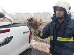 Dereye düşen yaralı Baykuş'u itfaiye kurtardı