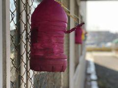 Kuşlar aç kalmasın diye pet şişelerden yemlik yaptılar