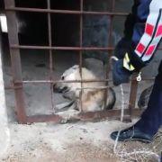 Menfezde mahsur kalan köpek kurtarıldı