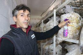 (Özel) Vanlı mantar üreticisi yeşil küf ilacı yaptı