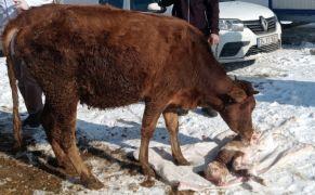 Uzmanlardan hayvan sahiplerine önemli uyarı