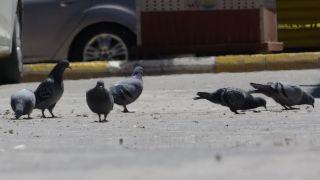 Kısıtlamanın devam ettiği Van'da sokaklar güvercinlere kaldı
