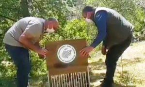 Kaçak avlanan 37 Kınalı Keklik artık özgür