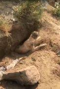 Fosseptik çukuruna düşen köpeği itfaiye ekipleri kurtardı