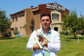 Gençliğini sevimli Van kedilerine adadı