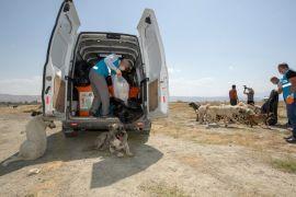 İpekyolu Belediyesi sokak hayvanlarını unutmuyor