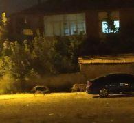 Yağmur suyu tahliye borusuna sıkışan 2 köpekr kurtarıldı