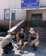 Araçlarında yaban keçisine ait boynuz trofesi bulunduran 4 kişiye toplam 69 bin 612 liralık ceza kesildi